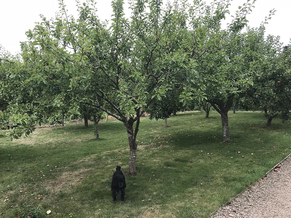 Apple Orchard, Bromesberrow