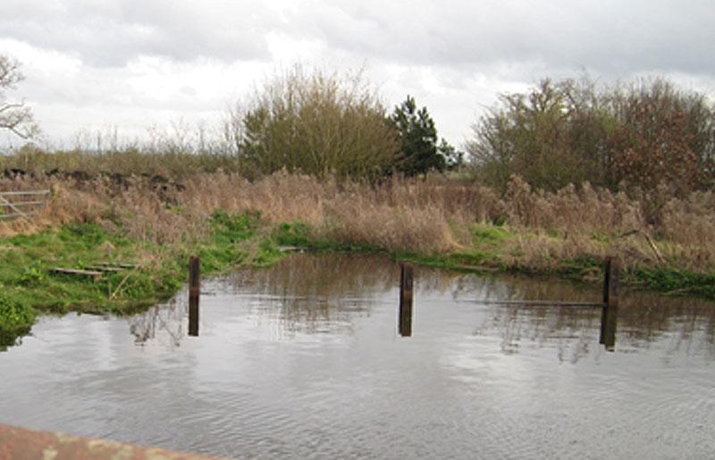 Creation of Ponds & Wildlife Habitat
